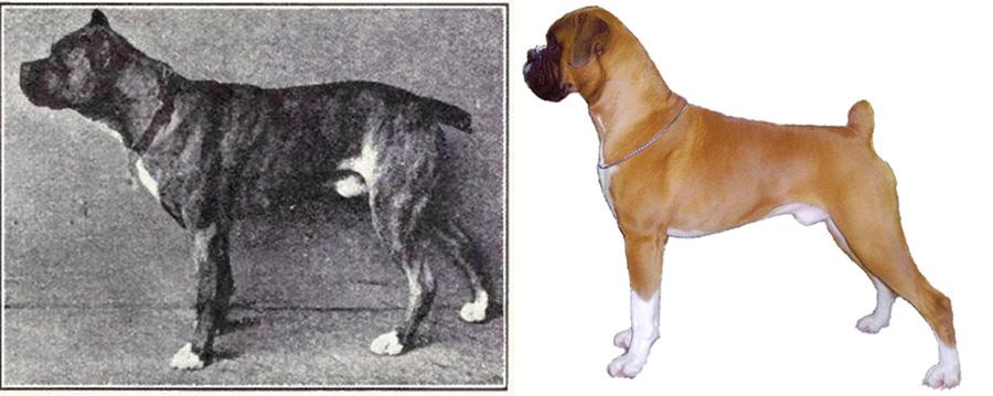 Состояние зубов у собаки