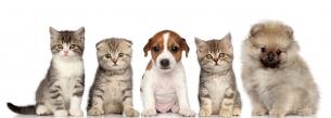 Удаление опухолей у животных