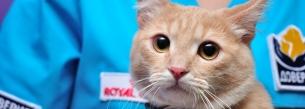 Кастрация котов и собак (кобелей)