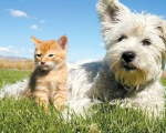 Перегрев домашнего животного – тепловой и солнечный удар