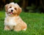 Почему собака чешется