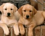 Распространенные болезни популярных пород собак