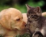 Кого выбрать: кошку или собаку?