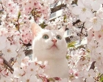 Кошка на улице. О чем стоит позаботиться владельцам весной