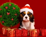 Собачьи новогодние резолюции