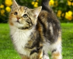 Какие средства можно использовать для защиты животных от укусов клещей