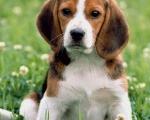 Популярные сегодня породы собак