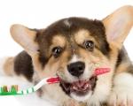Снятие зубного камня у собак