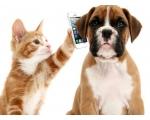 """Уважаемые клиенты, теперь вы можете на прямую звонить в стационар ветеринарной клинике """"Доверие"""", чтобы узнать, как себя чувствует ваш питомец по номеру 095-666-16-18"""