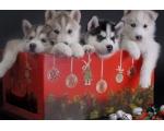 Поздравляем с Рождеством Христовым Вас и ваших любимцев!