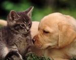Приглашаем животных на вакцинацию!