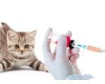 """Вакцинация в ветеринарной клинике """"Доверие"""""""