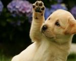 Выгодные предложения и акции от ветеринарной клиники «Доверие»