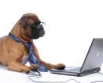 Свежие новости и информация об выгодных предложения ветеринарной клиники «Доверие» на странице Вконтакте!