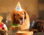 Ветеринарная клиника «Доверие» празднует свой День Рождения!