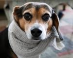 Лечение простудных заболеваний у животных в Харькове. Позаботьтесь о здоровье своего питомца!
